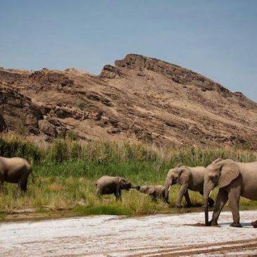 DIARI DI VIAGGIO: Namibia